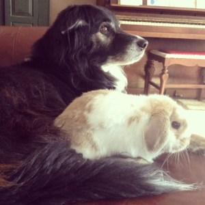 Rabbit and dog