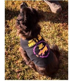 Black dog in a Jones chews sweater