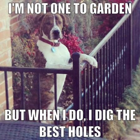 Gardening dog