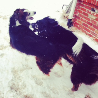 Bitey face in snow is fun!
