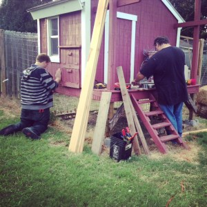 Reinforcing the chicken coop