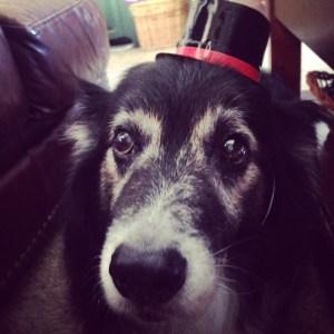 Senior Aussie in a hat