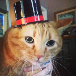 Thanksgiving Cat