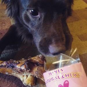 Dog sniffs out treats