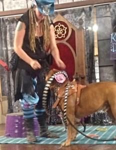 Hooch the trick dog