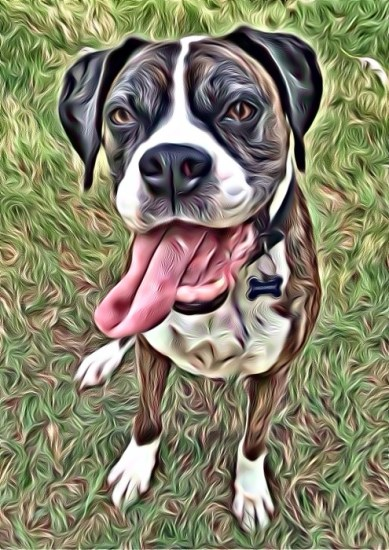 Boxer with the SuperPhoto app for smart phones
