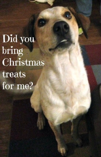Christmas treats for me?