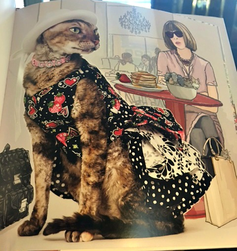 Coco le Chat picture book illustrations