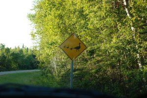 #Canada150 duck crossing sign