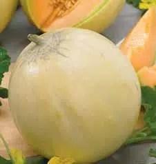 Sorbetto di melone charentais jo pistacchio for Melone charentais