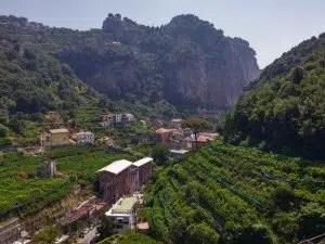 Limoncello-limoni-sfusati-costa-di-Amalfi