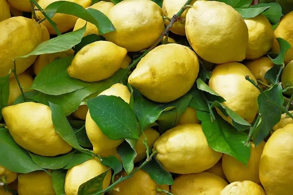 Limone Costa di Amalfi IGP