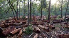 Deputados querem que ministro do Meio Ambiente explique combate às queimadas no Pantanal