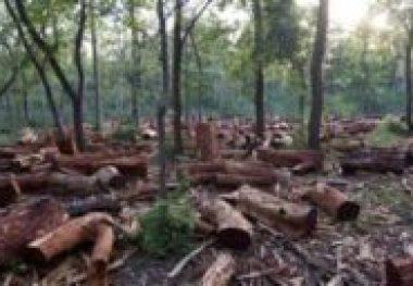 Queimadas na Amazônia - o maior número de focos dos últimos 13 anos