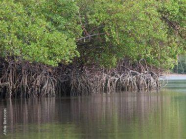 Ricardo Sales pretende revogar resoluções que protegem os manguezais