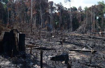 Manter Ricardo Sales no Ministério do Meio Ambiente significa não dá importância ao Meio Ambiente