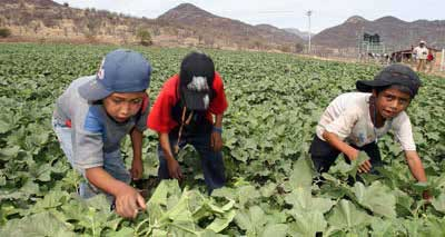 """Resultado de imagen de esclavos migrantes mexico"""""""