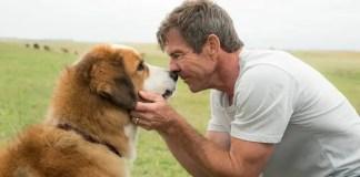 Imagem do filme Quatro Vidas de um Cachorro