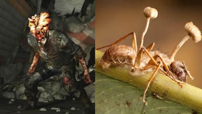 Fungo Cordyceps em The Last of Us