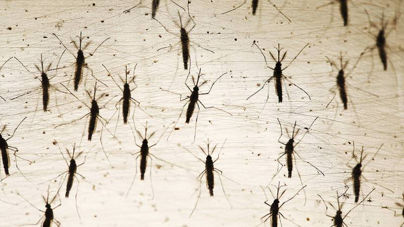 Zika vírus traz aborto de volta ao debate e coloca fé e saúde pública em choque