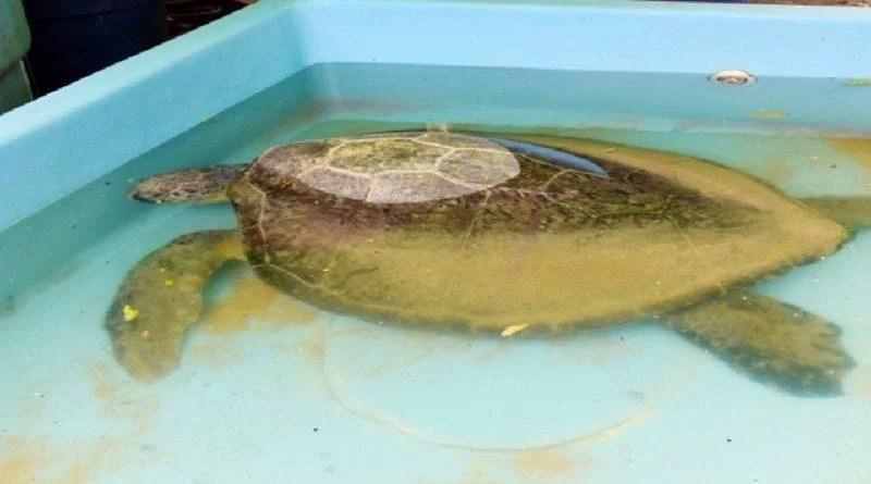 Parque Zoobotânico Arruda Câmara encaminha tartaruga para soltura