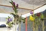 Inauguração Maná Flores e Plantas