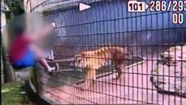 Vídeo mostra pai incentivando menino que teve braço dilacerado por tigre a brincar com leão em zoológico