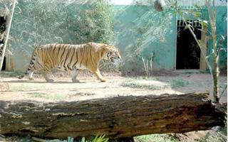 Vereador quer que Goiânia entre para a história com a extinção de zoológico