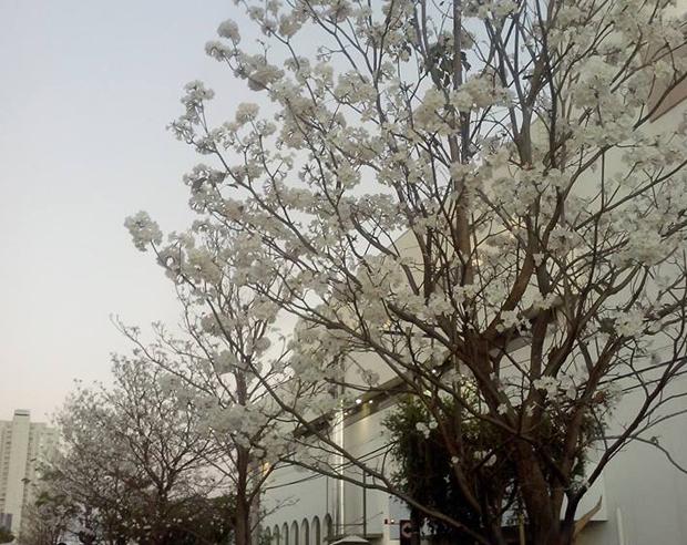 Goiânia comemora o Dia da Árvore como a cidade mais arborizada do Brasil e segunda do mundo