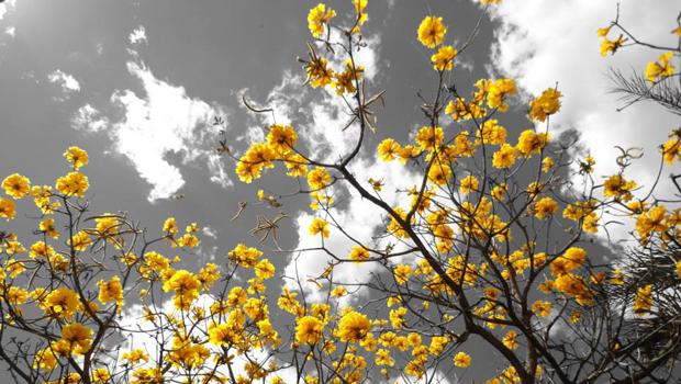 Os 13 melhores poemas goianos de todos os tempos