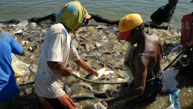 Tocantins tem se firmado como grande produtor de peixes no País | Foto: Reprodução/Seagro