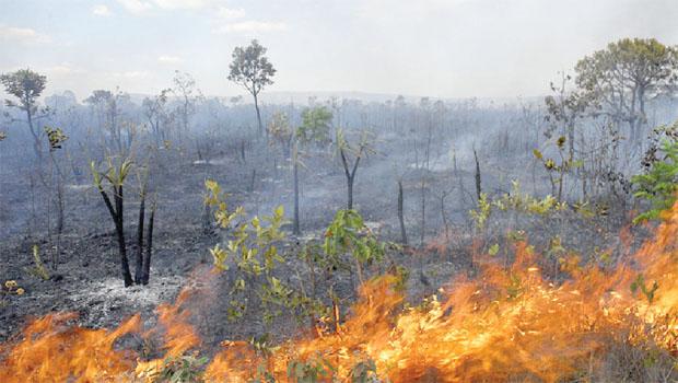 Ipam afirma que aumento das queimadas na Amazônia está ligado ao desmatamento
