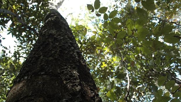 Só neste ano, Prefeitura já recebeu 1,1 mil pedidos para arrancar árvores