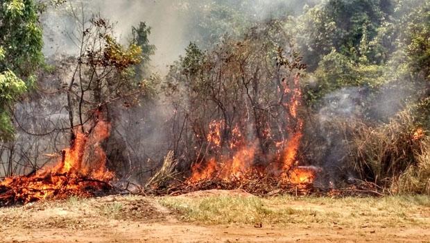 incêndio jardim botânico