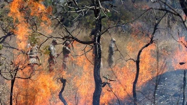 Autoridades em alerta: riscos de incêndios são maiores com a umidade tão baixa | Foto: Fernando Leite/ Jornal Opção