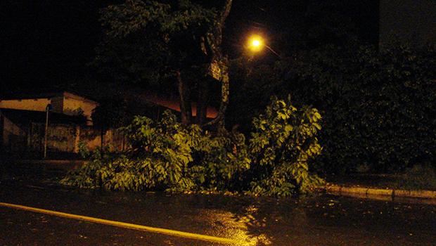 Árvore caída no Setor Crimeia Oeste, em Goiânia | Marcello Dantas
