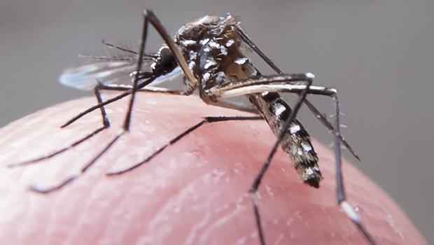 Aberta temporada de caça aos focos do mosquito transmissor da dengue, zika e chikungunya