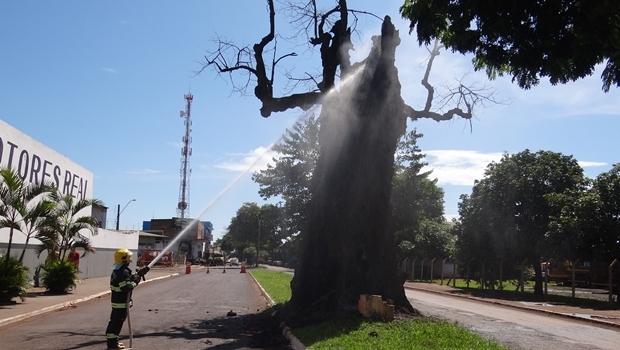 Bombeiro tenta apagar chamas da árvore | Foto: Ascom / Prefeitura de Rio Verde