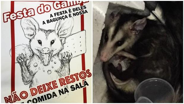 Visitante assíduo, gambá é encontrado na Assembleia Legislativa de Goiás