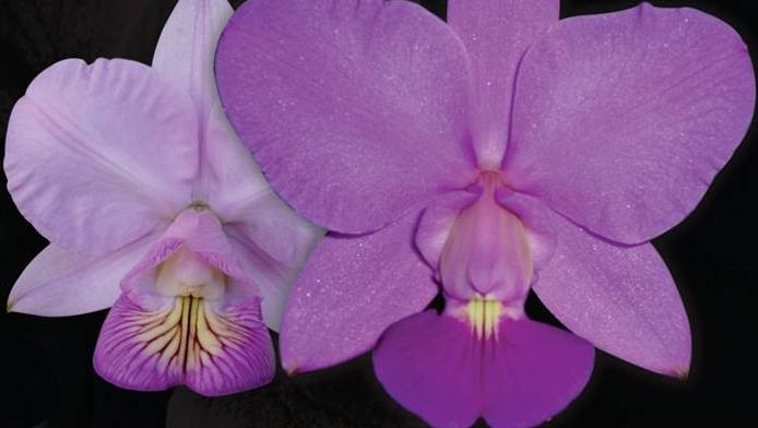 23ª Exposição Nacional de Orquídeas de Goiânia ganha o Bosque dos Buritis