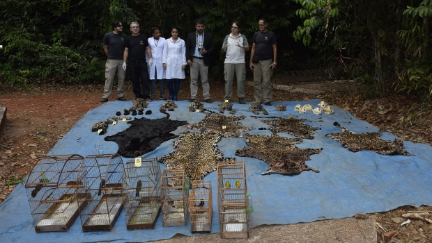 Polícia encontrou cabeças, patas e peles cortadas de felinos, como a onça pintada, e aves confinadas em gaiolas   Foto: Alysson Souza/ICMBio