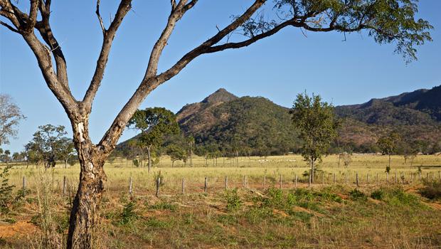 Desmatamento no Cerrado diminui, mas perda atinge 51% da região