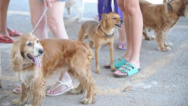 Câmara de Goiânia sedia 1ª Semana de Proteção Animal