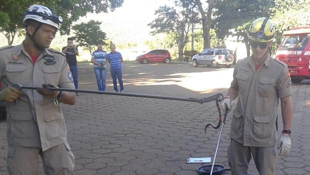 Bombeiros resgatam cobra dentro de prédio da prefeitura de Jaraguá