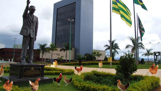 Depois da horta, o goianiense não deve ficar surpreso se Iris iniciar criação de galinhas no Paço