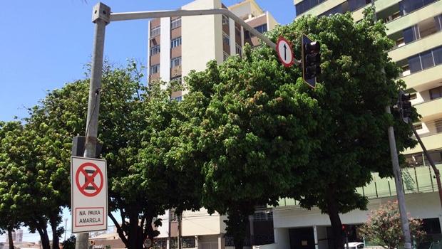 Gestão Iris contratou papelaria para fornecer postes de aço para semáforos