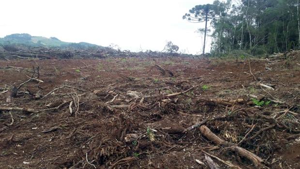 Tocantins reduz desmatamento em 55% e é destaque em evento da ONU