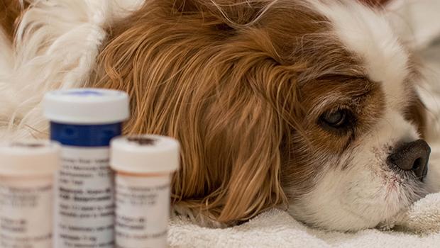 Goiás pode ter Farmácia Popular Veterinária para animais de estimação