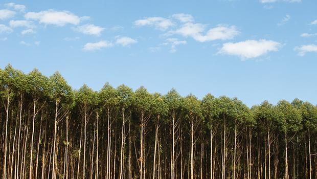 Sebrae-GO promove ciclo de encontros para discutir florestas plantadas em Goiás