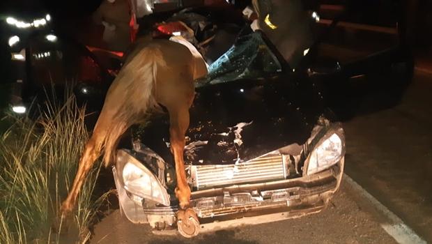Acidente entre carro e cavalo deixa uma pessoa morta e três feridas na BR-153